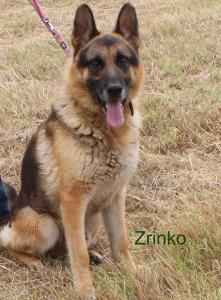180905-Zrinko