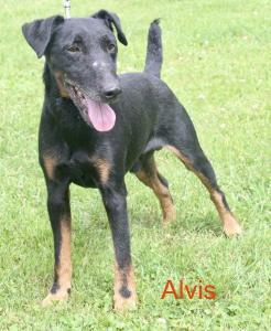 181002-Alvis