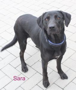 181210-Sara