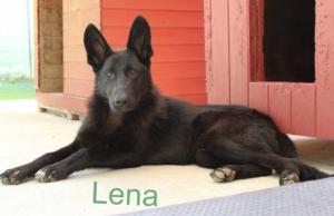 181223 Lena