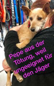 Pepe 25.11.2019