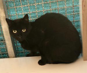 Blacky Tino 19.09.19