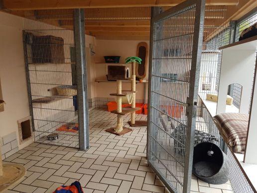 Katzenaussengruppenraum