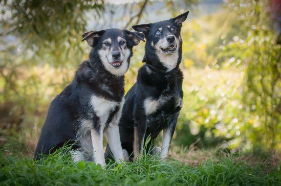 Hani und Fanni (Foto: Sandra Zittlau)