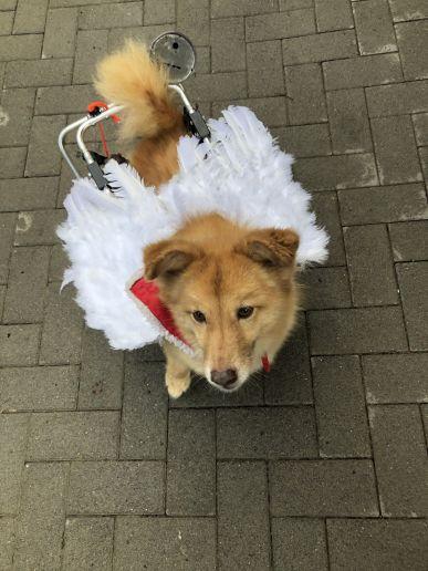 Tierschutzverein-Kinzig-Main-eV-Weihnachtsmarkt-2019-18