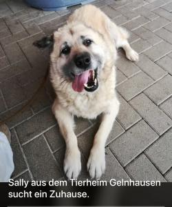 Sally 06.09.2020