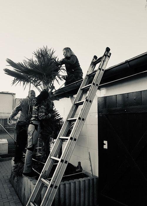 Mal eine andere Perspektive im Palme winterfest verpacken- geminesam schaffen wir auch neue Herausforderungen