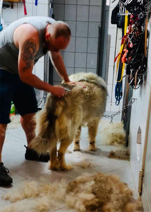 Fellpflege- ein haariges Thema für manche Hunde