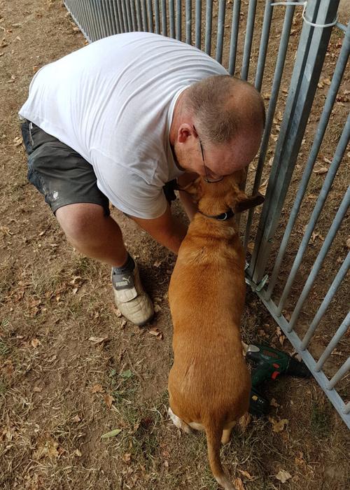 Die  Hunde lieben Handwerker