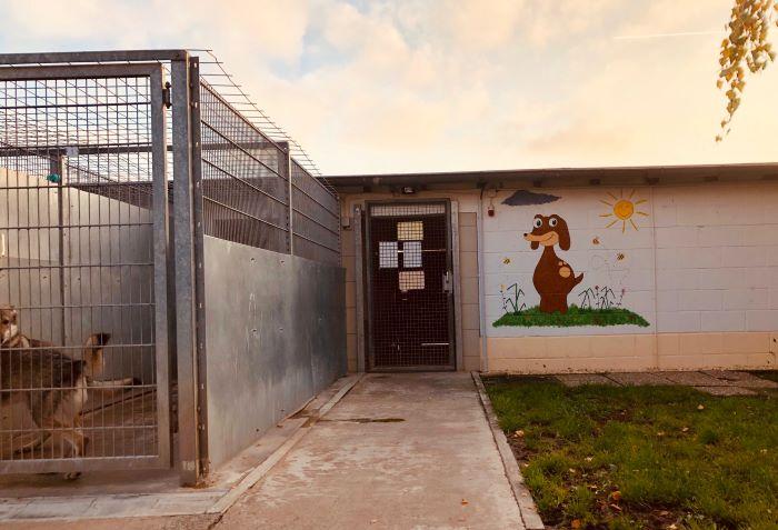 Ausgang von der Zwingeranlage-trotz lustigem Hund- Gitter sind Gitter