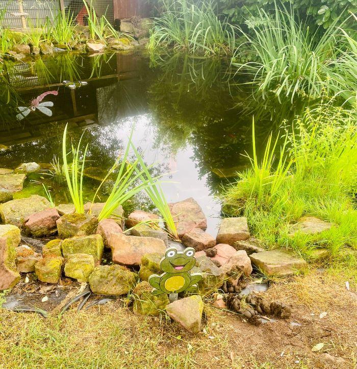 Der Teich im Frühjahr