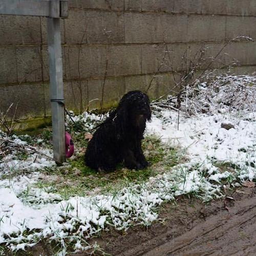 Ausgesetzt bei Eis und Schnee, ein Pudelchen, was muss in seinem Kopf vorgegangen sein?!