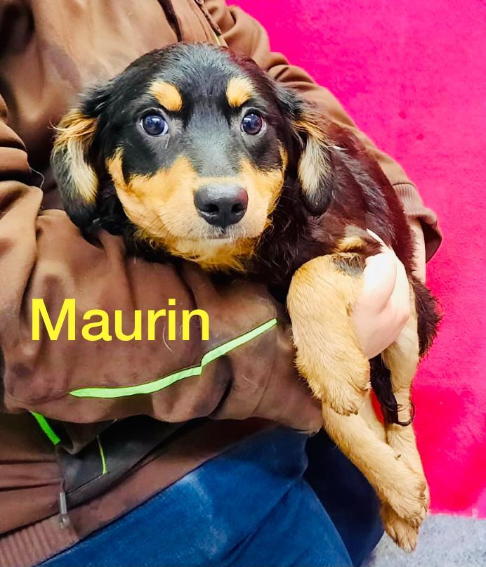 Maurin 27.01.2021