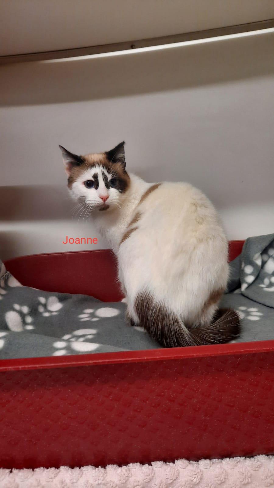 Joanne 06.02.2021