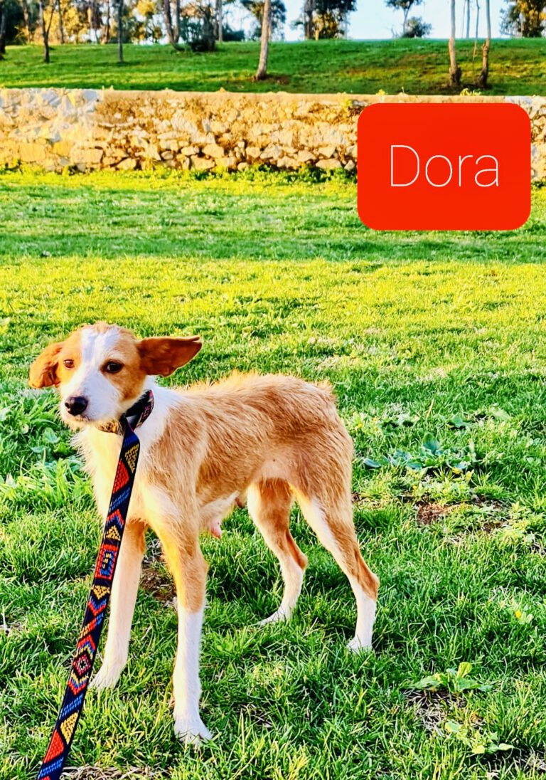 Dora 03/2021