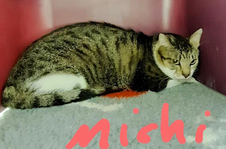 Michi 07/2021