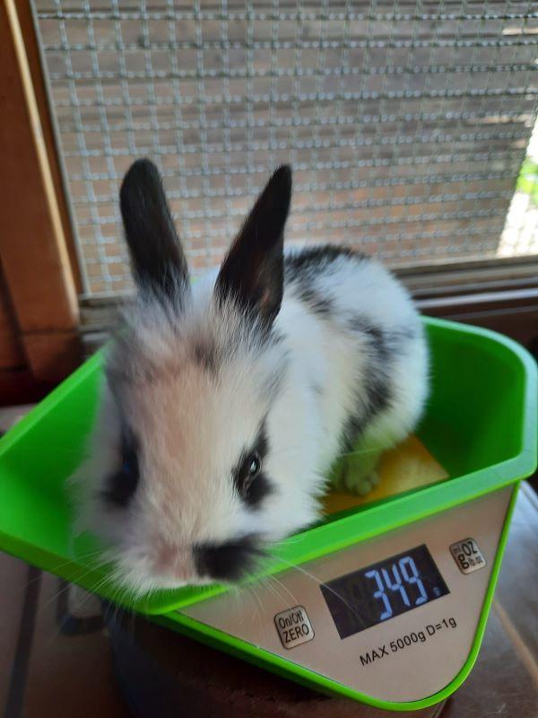 Malve Kaninchenbaby