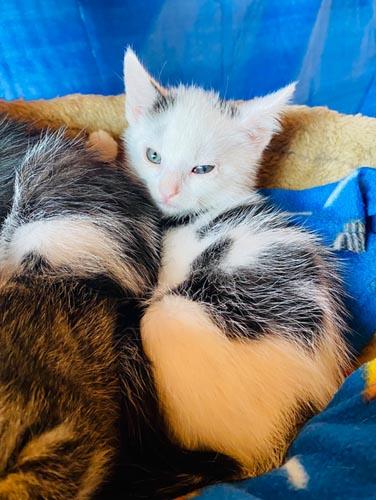 Mucki Kitten -Reserviert
